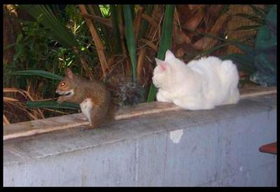 Trouble Coexists With A Squirrel